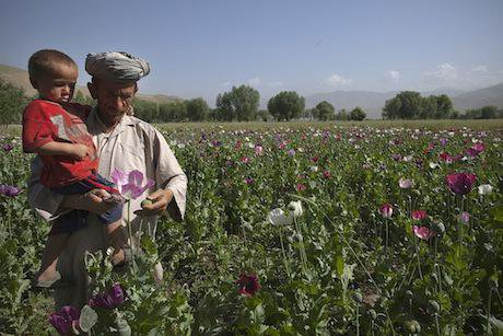 Poppy cultivation, Badakhshan. Getty Images / Paula Bronstein. All rights reserved.