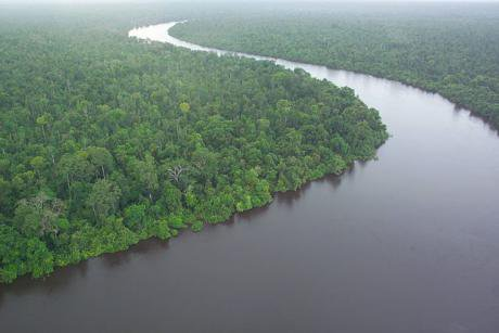 A peat forest in Kalimantan.