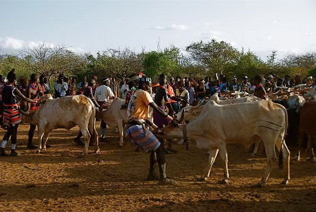 Locals performing traditional 'cow jumping'. It is a key tradition that must be done before a man is permitted to marry. Turmi, Debub Omo Zone, Ethiopia. 02/08/2010.