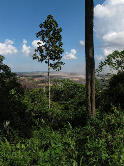 The frontline; rainforest reduced to dust. Mining and logging operations threaten extinction for the orang-utan, clouded leopard, sun bear and pygmy elephant.