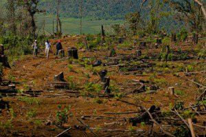 The town's community police patrol the forest protecting members of the community involved in reforestation