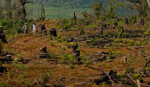 Police protect members of the community involved in reforestation