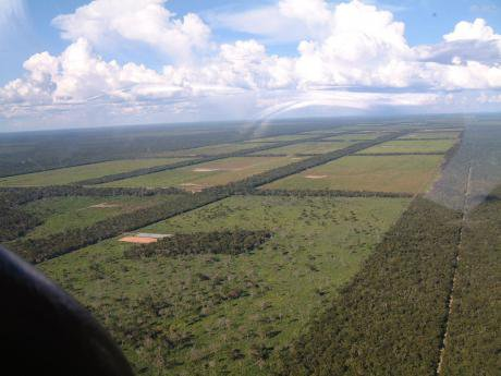 ParaguayChaco_Clearings_for_cattle_grazing_1.jpg