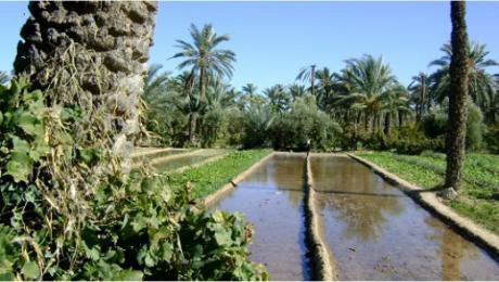 Irrigation canal in the coastal oasis of Chenini