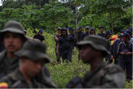 Narcotics police eradicate coca crops, Colombia. William Fernando Martinez/Flickr. Some rights reserved.