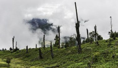 Deforestation and disease Indian forests